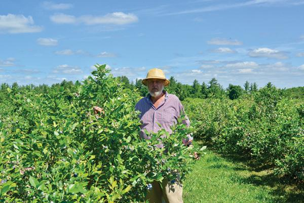Organic Blueberries thrive on Covey Hill