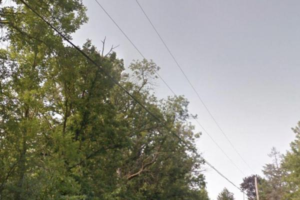 Hudson residents fight for three hundred year-old oak tree