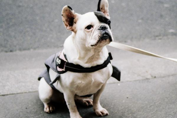 Blainville tightens the leash