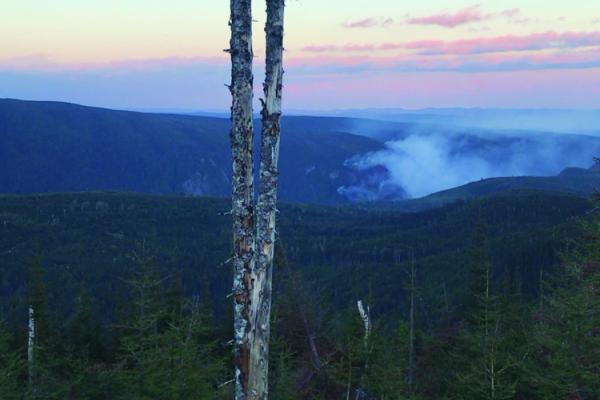 Forest fire ravages 22 hectares