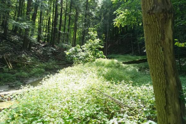 Rosemère greener than ever!