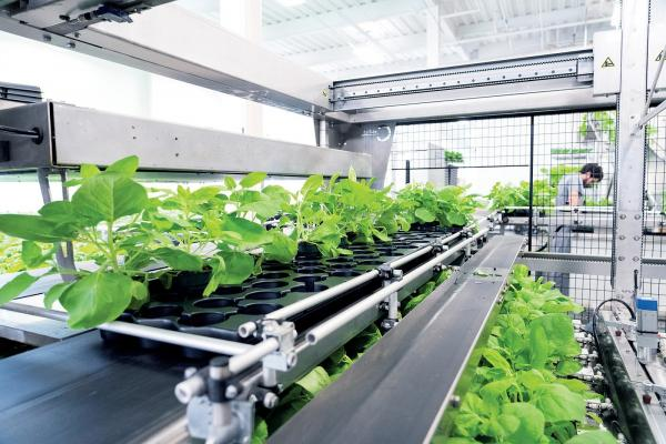 Health Canada to review Medicago Phase 3 COVID-19 vaccine trials