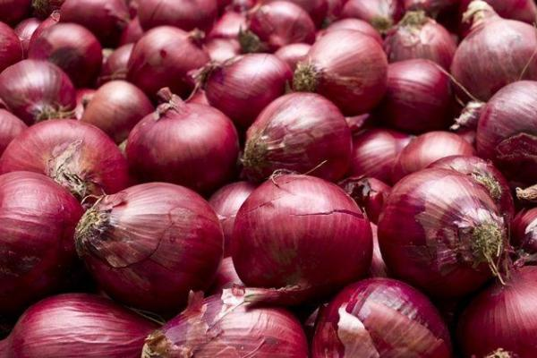 Outbreak of Salmonella infections linked to red onions imported from the United States