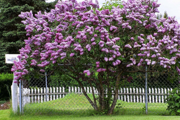 City offers free trees to residents